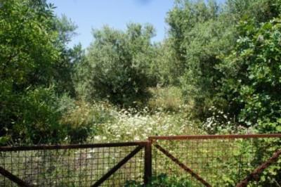 Spanohori-Ria1.jpg